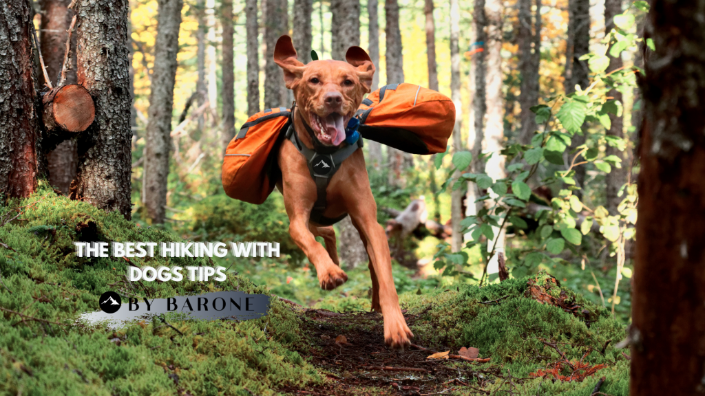 Best Hiking With Dogs Tips BY-BARONE