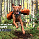 6 Best Hiking With Dogs Tips: Hike With your Dog – BY BARONE