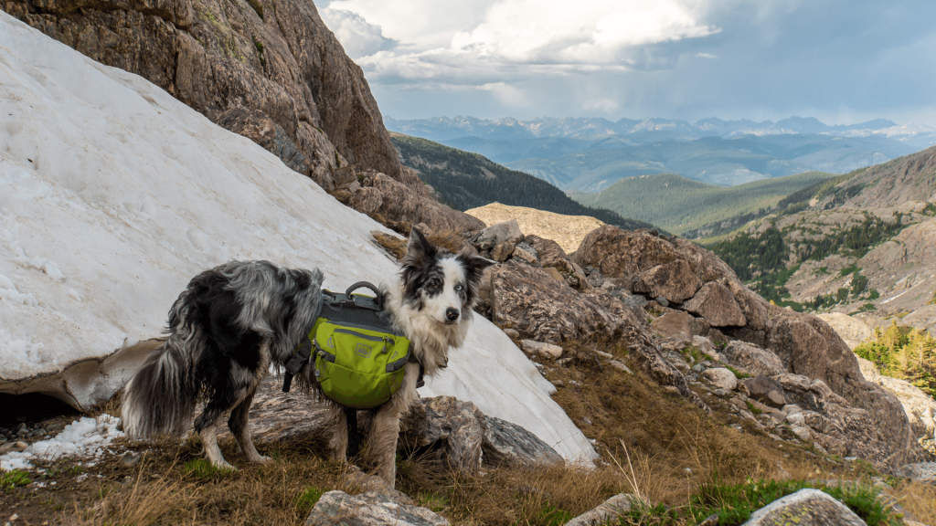 Strap and Harness for hiking with a dog